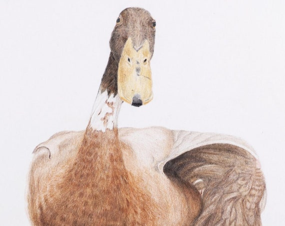 Indian Runner Duck Yoga - high quality archival print
