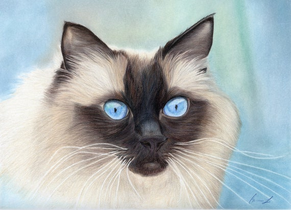 Siamese Cat - high quality archival print