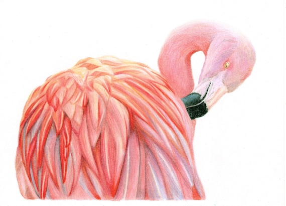 Flaming Flamingo - high quality, archival print