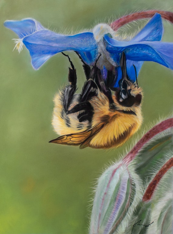 Borage and the Bee - high quality, archival print