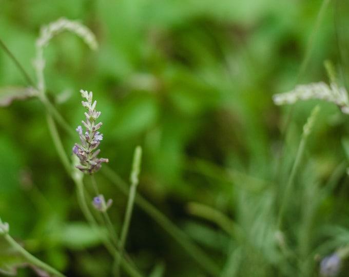 LAVENDER FLOWER ESSENCE - vibrational elixir - plant magic