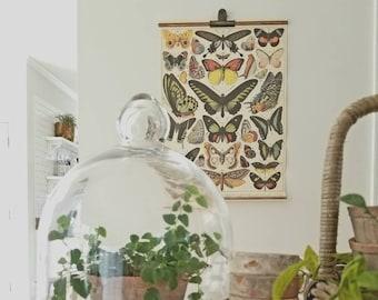 Vintage Botanical Scroll- Butterflies/Papillions (Wall Hanging, Home Decor)