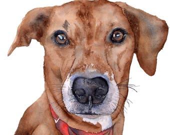 Custom Watercolor Dog Portrait 8.5 x 11