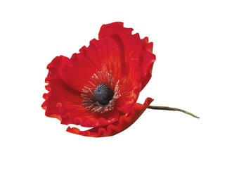 Red Poppy / Dimensions  / Red Poppy: 3.25 x 3.1 x 1.4 inches