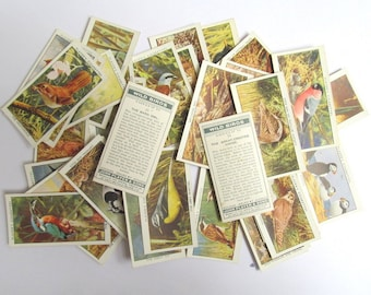 Wild Birds, John Player cigarette cards: pack of 44 bird cards from 1932. Collectible ephemera or for craft, scrapbook, collage OT675