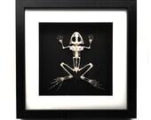 Real Frog Sleleton Framed, Horror, Skull, Oddity, Goth, Gothic, Taxidermy, Real, Shadowbox Frame