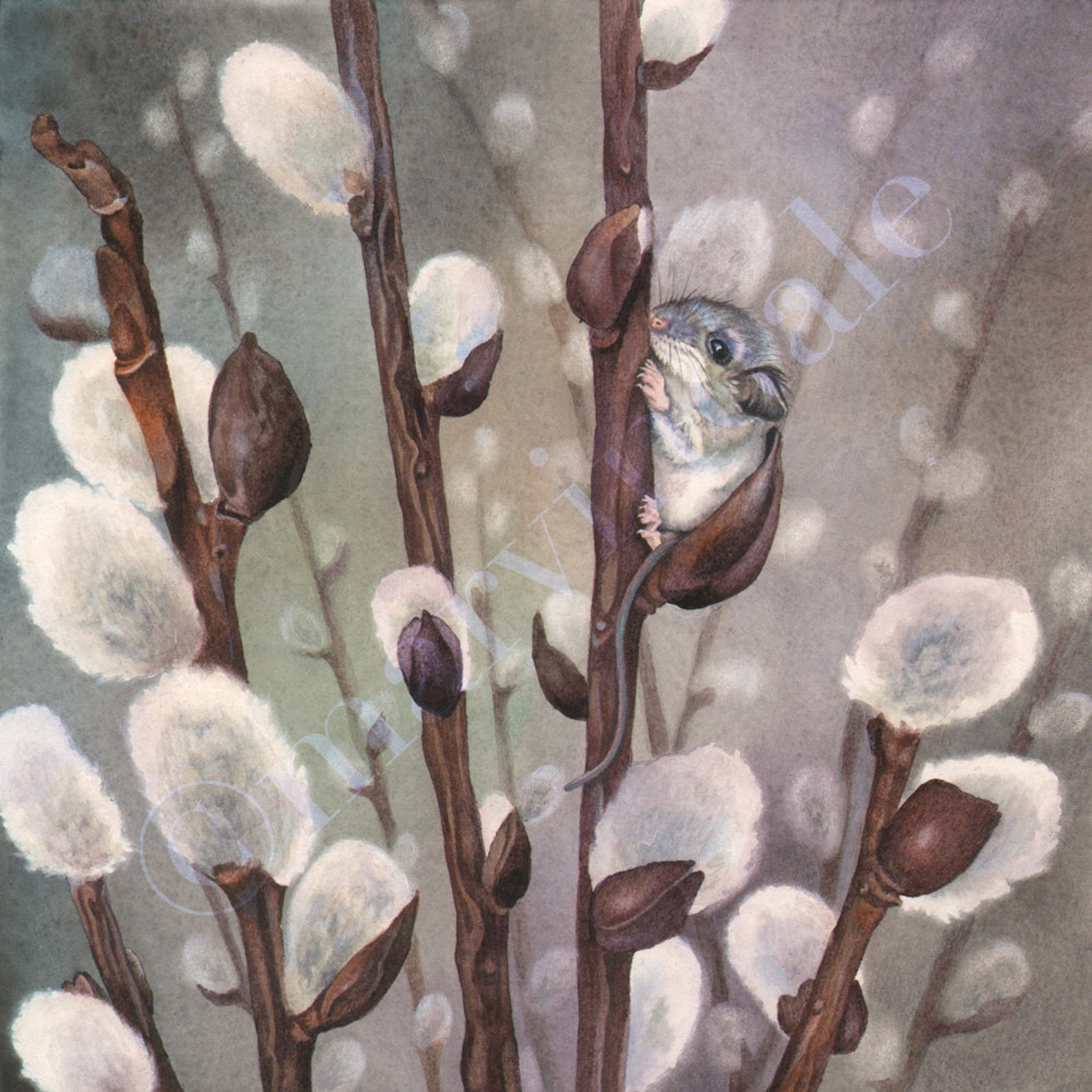 Pussy Willow Paintings