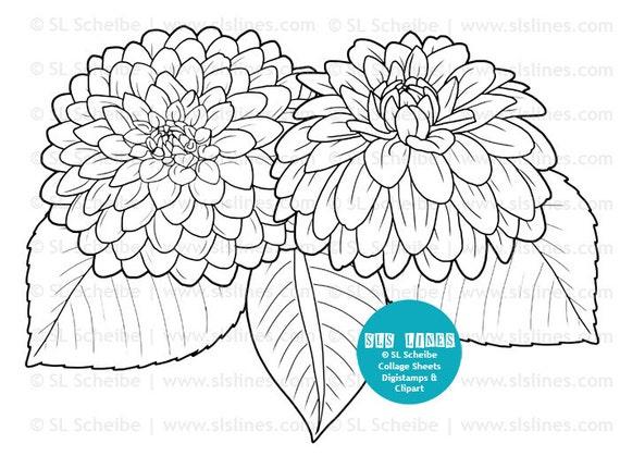 Bündel schwarzen Außenlinien Blumen Dahlien Malvorlagen Blume | Etsy