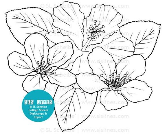 Bündel schwarzen Außenlinien Blumen Hibiskus Malvorlagen