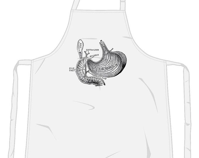Vintage Art Stomach Anatomy Diagram Illustration Cooking Chef Kitchen Apron. White.