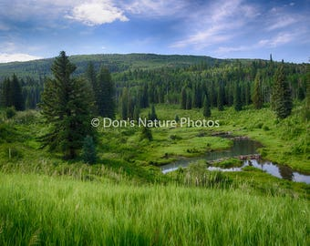 North fork of the Gunnison River, near McClure Pass, Colorado. 12X18  #3025