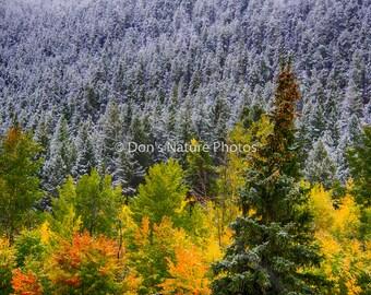 Fall colors, Colorado. Near Leadville. #3021