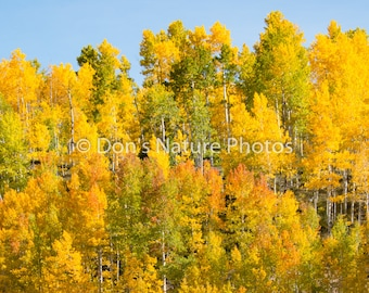 Fall on the San Juan Skyway, Colorado. Wonderful colors. #4026