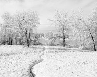 Path to the lake, Cherry Creek State Park, Colorado. 12 X 18 #3028