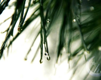 Nature Photography.  Rain Photography.  Spring and Winter Photography. 8x12 Print