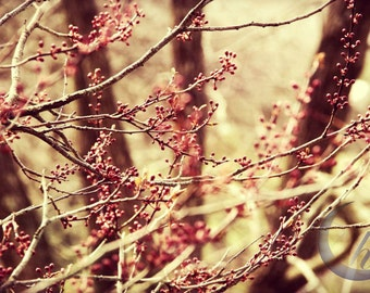 Nature Photography.  Garden and Flower Photography. Winter and Early Spring Photography. 8x12 Print