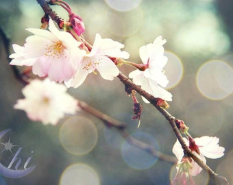 Cherry Blossom Sakura Photography. Nature Photography.  Flower & Garden Photography.  Spring Photography. 8x12 Print