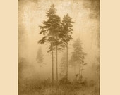 Foggy Tree Silhouette - W...