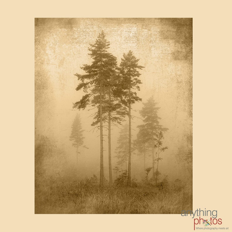 Foggy Tree Silhouette  Woods  Forest Nature Rustic Artwork image 0