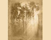 Sun Rays in Tree - Woods - Forest Nature Rustic Artwork on Wood Panel - Made in USA