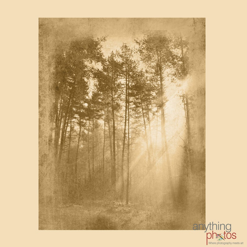 Sun Rays in Tree  Woods  Forest Nature Rustic Artwork on image 0