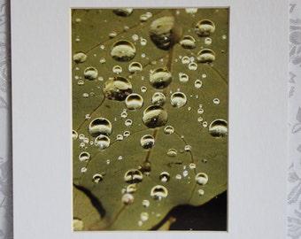 Raindrops - -Matted Photo