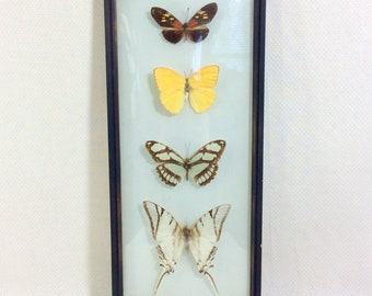 1970s Taxidermy Butterfly Framed Wall Hanging with 4 Species of Brazilian Butterflies