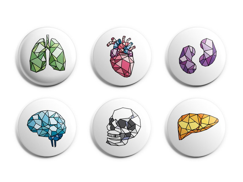 Anatomy Magnets or Pins  Geometric Body Parts  Human Anatomy image 0