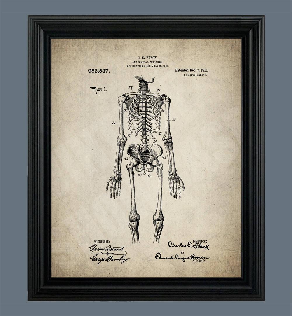 Jahrgang menschlichen Anatomie medizinische Poster Skelett   Etsy