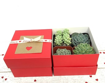 """4 Premium mini Succulents in a Red Gift Box, 2"""" Succulent Plant Collection, I'm Sorry Gift, Gift for Her, Succulent Gift Box, Birthday Gift"""