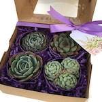 Mother's Day Succulent Gift Box with 4 beautiful 2.5 inch succulents and FREE shipping