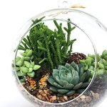 "Succulent Terrarium Kit-Terrarium DIY Kit ""Woodsy""-Housewarming Gift-Birthday Gift-Glass Terrarium Kit-Graduation Gift-DIY Home Decor"