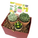 Birthday Gift-Set of Succulents in Terra Cotta Pots with Succulent Candle-Succulent Gift Box-Terra Cotta Pots-Housewarming Gift-Cactus Gift