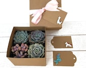 Succulent Plants Variety Pack in Gift Box-Mini Succulent Collection-Mermaid Gift Box-Llama Gift-Unicorn Gift-Succulent Gift for Her-Plants