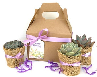 Succulent Gift Boxes