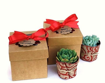 one christmas succulent gift box christmas office gifts garden in a box christmas gift box holiday client gift ship a succulent