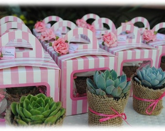 12 Succulent Wedding Favors with Gift Boxes-Succulent Baby Shower Favors-Succulent Burlap Favors-Succulent Bridal Shower Favors-Pink Favors