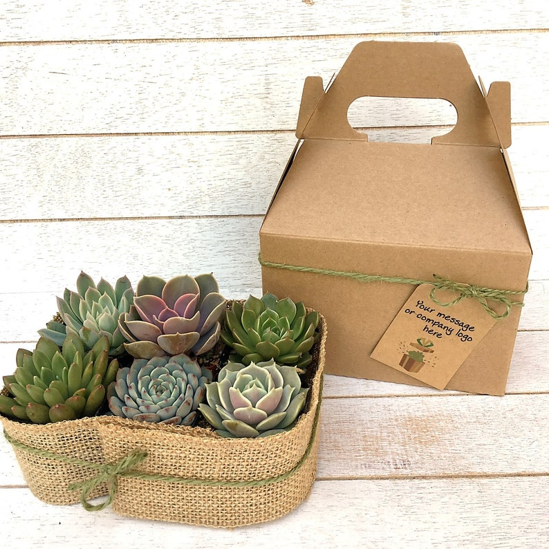 Gift Box with Six 2 inch Succulents-Birthday Gift Box of image 0