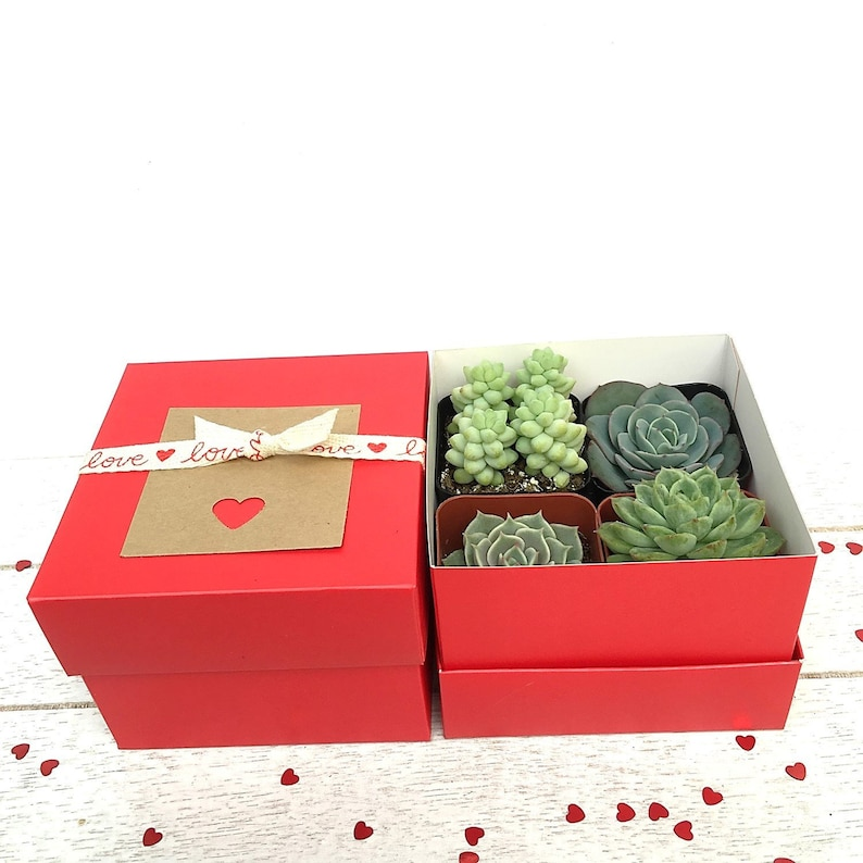 Succulent Gift-4 Premium mini Succulents in a Red Gift image 0