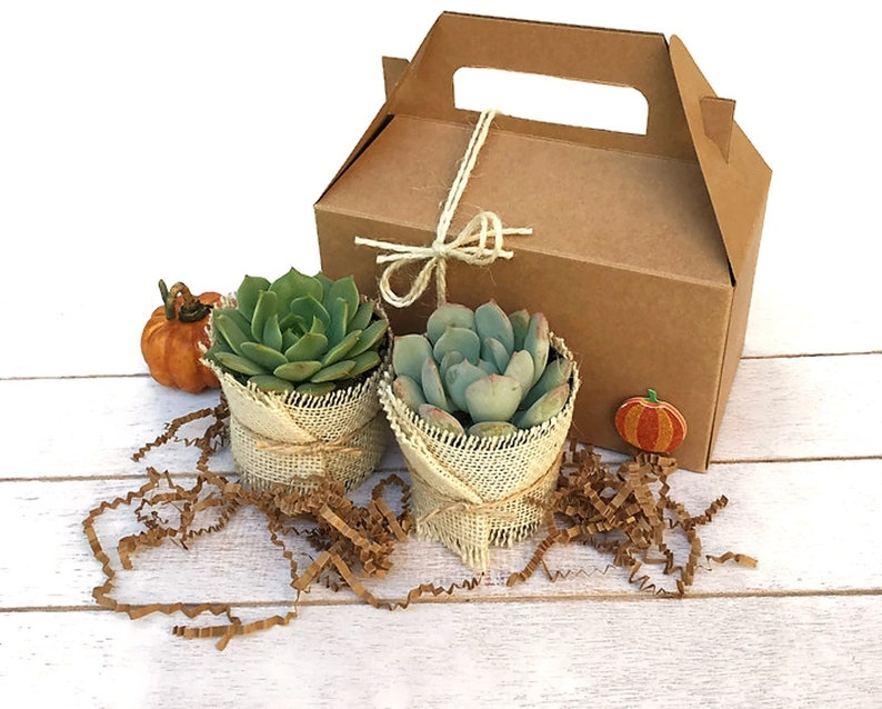 Fall Gift Box with 2 Succulents-Live Succulent Box-Plants in a image 0