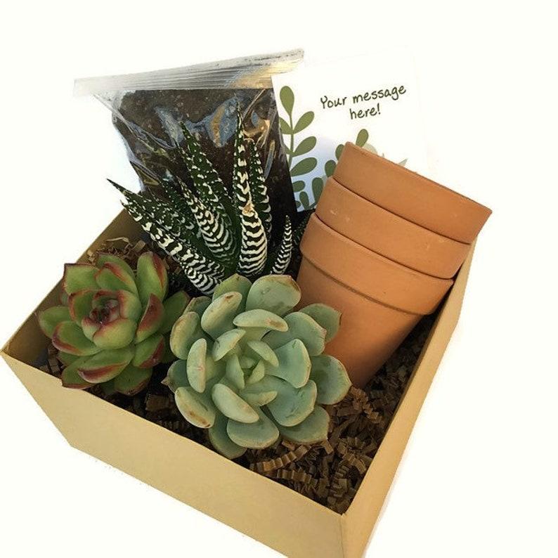 Happy Birthday Succulent Gift Box-Send A Gift-Terra cotta image 0