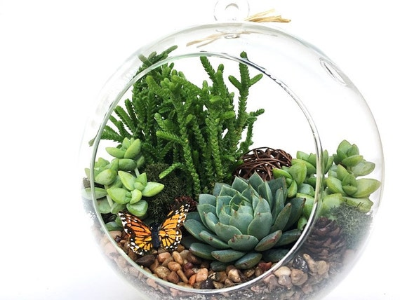 Succulent Terrarium Kit Terrarium Diy Kit Woodsy Housewarming Gift Birthday Gift Glass Terrarium Kit Graduation Gift Diy Home Decor