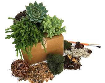 Terrarium Starter Kit-Large Woodsy Succulent Terrarium Refill Kit-Terrarium Supplies-DIY Kit-Gardener Gift-Housewarming Gift-Succulent Kit
