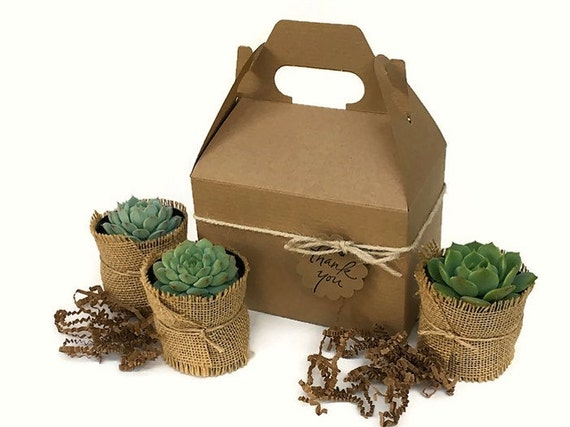 Succulent Gift Box Garden In A Box Personalized Gift Gardener | Etsy