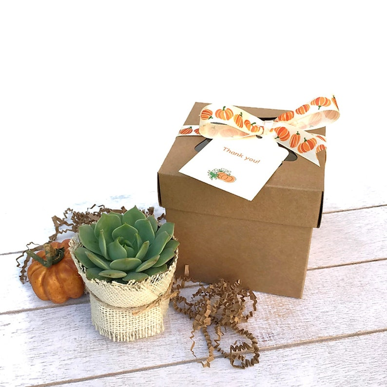 Fall Succulent Gift Box-Rustic Succulent Favor-Thank You image 0