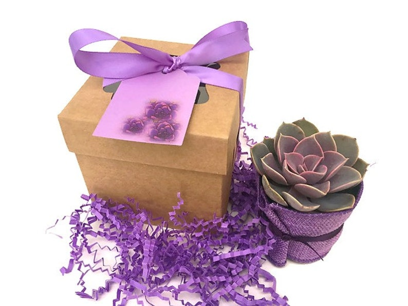 Succulent Bridesmaid Gift-Purple Succulent Gift Box-Gift for image 0