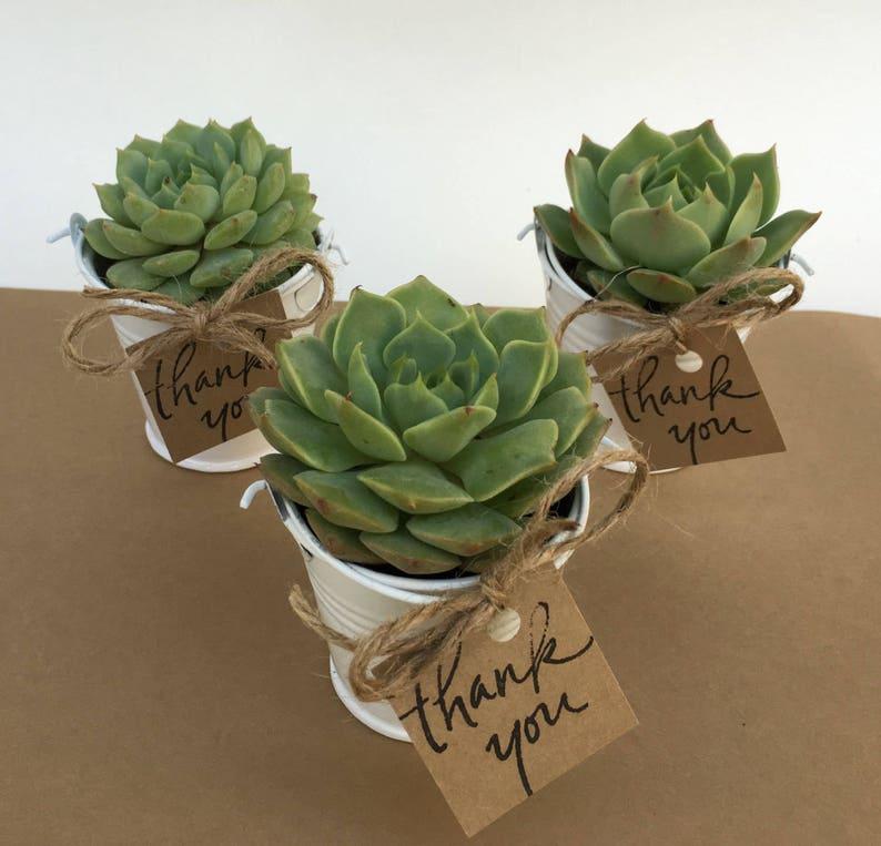 16 Plant Favors-Succulents-Succulent Party Favors-16 Plant green / thank you