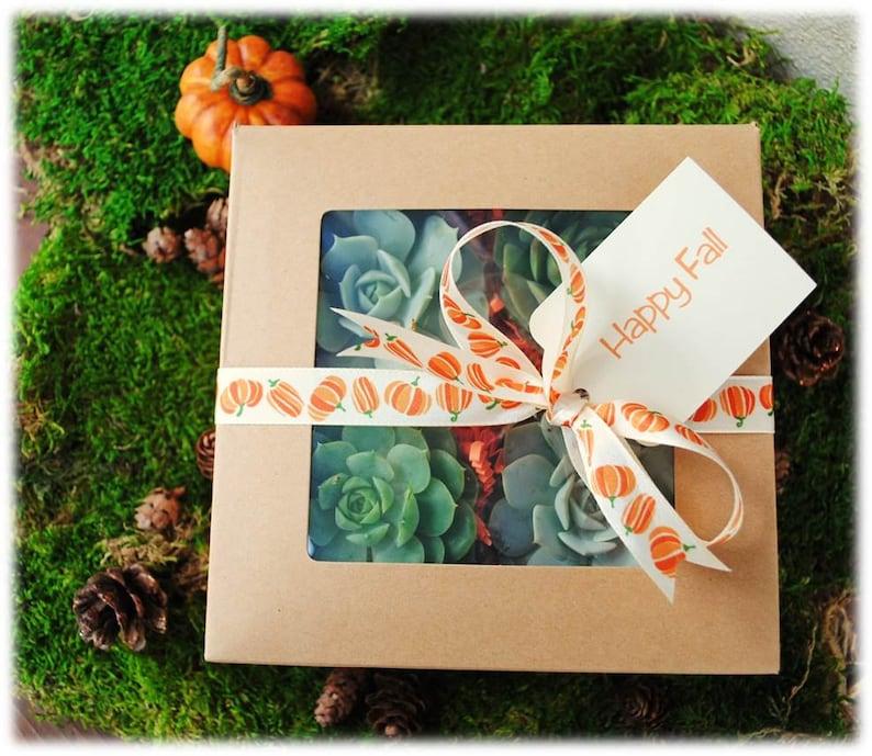 Garden Gift-Fall Succulent Gift Box-Thanksgiving Hostess image 0