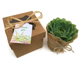 Bridesmaid Gifts-Set of 4 Individual Succulents in Gift Boxes-4 inch Succulent Gift-Thank You Gift-Succulent Box-Gardener Gift-Plant Box