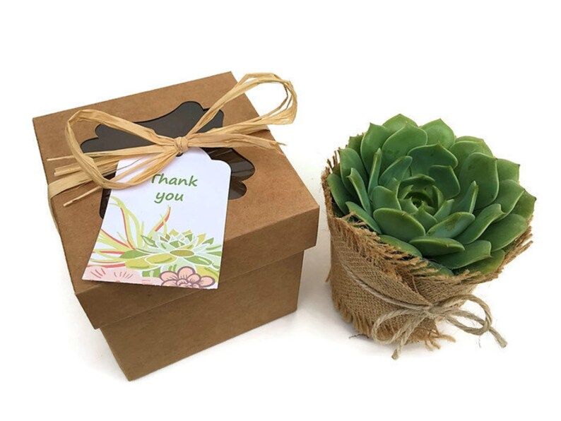 Individual Succulent in Gift Box-4 inch Succulent Gift-Thank image 0